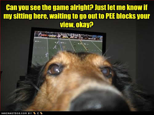 funny-dog-pictures-see-game.jpg