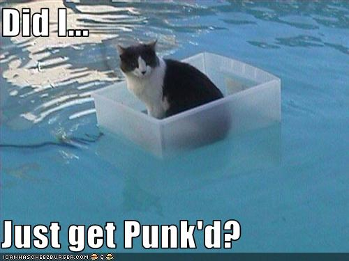 funny-pictures-cat-floats-in-pool.jpg