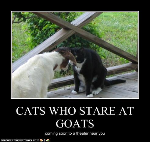 funny-pictures-cat-stares-at-goat.jpg