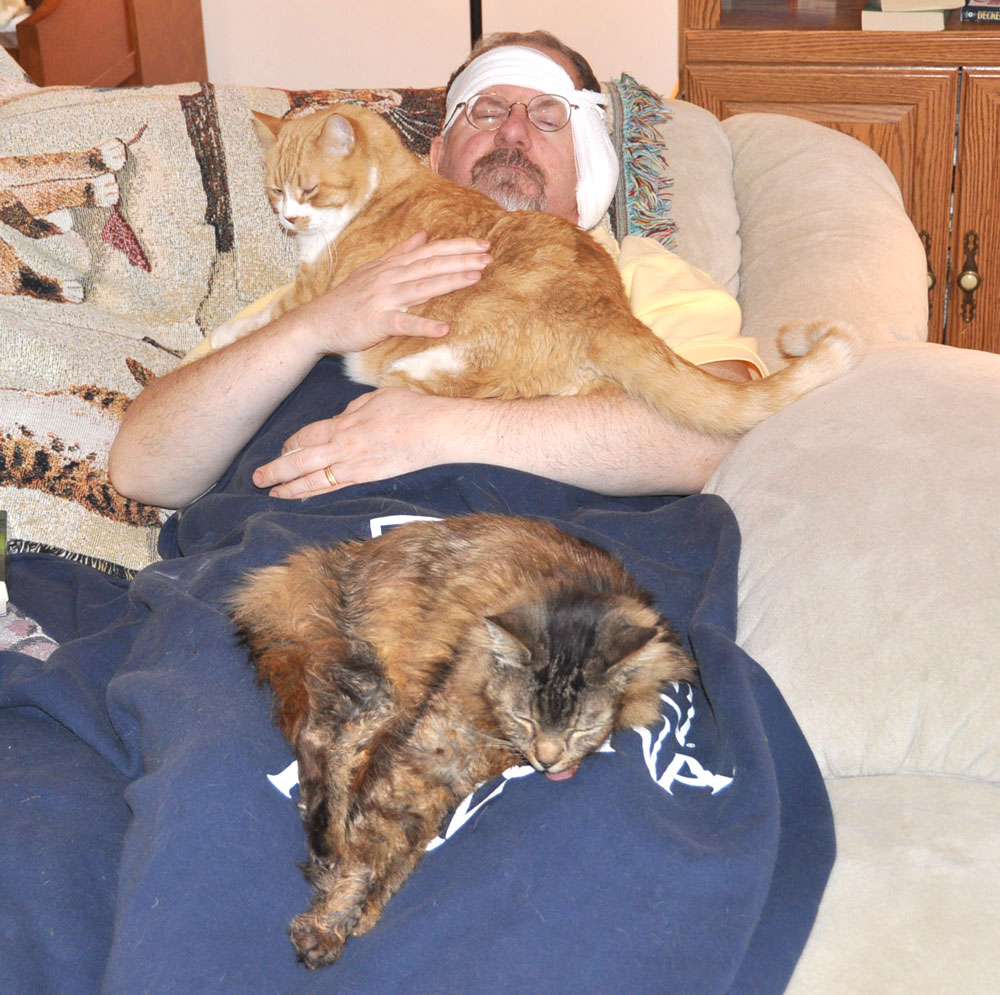 surgery_couch-2cats-1000.jpg